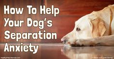 Separation anxiety is a common behavioral problem in dogs. If your dog is suffering from separation anxiety, contact your veterinarian for…