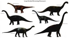 dinosaurs - Yahoo Image Search Results