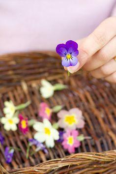 Saídos da Concha: Spring :: Crystallized Flowers