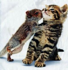 Squirrel Kissing A Kitten cute animals cat cats adorable animal kittens pets kitten squirrel funny animals Cute Baby Animals, Animals And Pets, Funny Animals, Funny Cats, Animals Kissing, Wild Animals, Funniest Animals, Animals Az, Animals Planet
