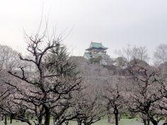 Ōsaka Castle – Sicht vom japanischen Pflaumenhain Garten aus