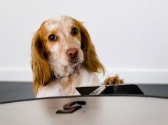 Kunnen honden helpen bij vroegtijdige opsporing van darmkanker?  KNGF Geleidehonden is samen met het VU medisch centrum eind vorig jaar een pilot gestart om deze vraag te onderzoeken. Lees hier meer en bekijk het filmpje van onze speurneuzen in actie.