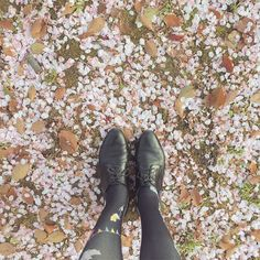 With the warm spring breeze delicate petals of the Sakura float from the branches creating a swirl of pale pink confetti snow. Such a beautiful reminder of how life is fleeting. There are beginnings endings cycles and all the moments in between. #cycles