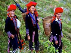 Red Dao ethnic in Sapa