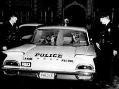 Saint Louis Canine Officers and Dogs on Duty City of Saint Louis Police Department(Missouri)