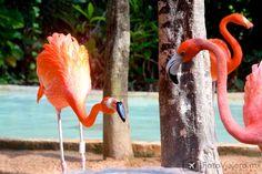 Comite de bienvenida flamingo. Color, color y más color! #Xcaret