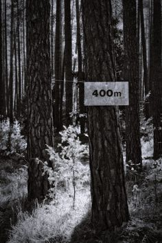 bwstock.photography  //  #400m #pine #forest Black White Photos, Black And White, 400m, Pine Forest, Free Black, Public, Nature, Plants, Photography
