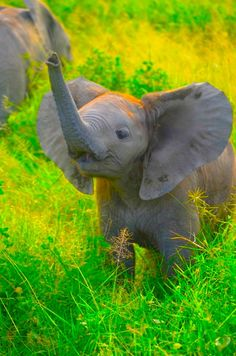Awww... Such a cutey Baby Elephant! ❤ ❤ ❤