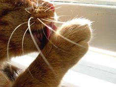 Natural Cat Care Blog
