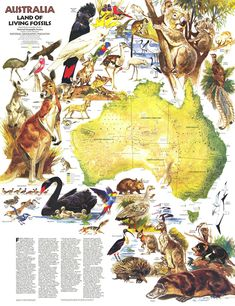 size: Art Print: 1979 Australia, Land of Living Fossils Map by National Geographic Maps : National Geographic Maps, Living Fossil, Australia Map, Wall Maps, Australian Animals, Travel Maps, Map Art, Fossils, Vintage Posters