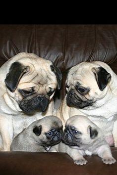 Puggie Family