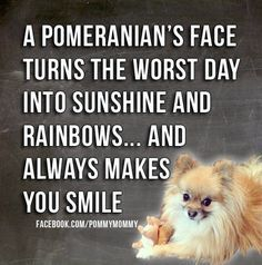 Oh, I couldn't have said it better! I just love seeing my baby cakes sweet little Pomeranian face, I smile every time!