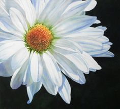 White Daisy, a watercolor by Donna Lesley, image:  19.5 x 21.5 inches