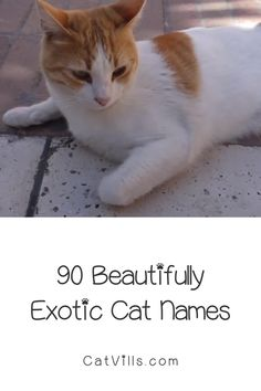 Tired of the same old boring ideas for kitty monikers? Check out 90 of the most beautifully exotic cat names for males & females!