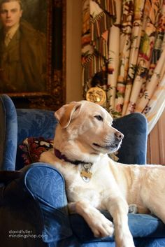 LABRADOR – A yellow lab and his favorite chair.