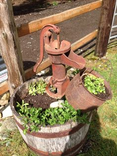 Whiskey barrel, water pump and antique melting pot filled with sky blue lobelia.