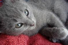 Please follow, like and post feedback if you feel this pet is cute:) #cats #catsagram #catstagram #instagood #kitten #kitty #kittens #pets #animal  #petstagram #petsagram  #catsofinstagram #ilovemycat #instagramcats #catoftheday #lovecats #lovekittens #catlover #instacat  #dog #puppy #pup #dogsofinstagram #ilovemydog