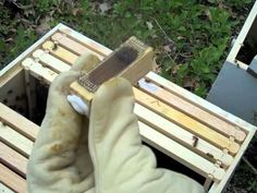 What Should I Be Doing With My Bees This Month? FOR BEEKEEPERS IN NORTHERN CLIMATES