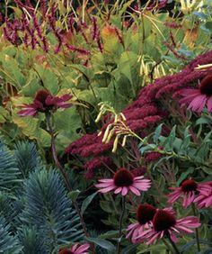 Stacie Crooks' garden #1:  Persicaria, Echinacea, Autumn Joy sedum, Cape fuchsia, Euphorbia