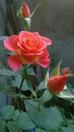 Apaixonados por flores - Comunidade - Google+: