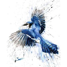 BLUE JAY PAINTING watercolor blue jay, blue jay art, bird art, bird... ❤ liked on Polyvore featuring home, home decor, wall art, watercolour painting, bird wall art, blue bird painting, water colour painting and portrait painting