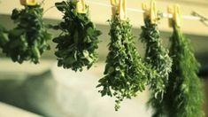 Как сушить травы для специй