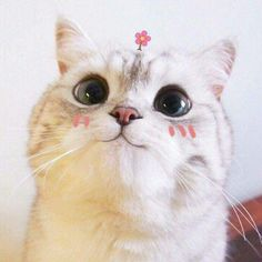 Find images and videos about cute, cat and kawai on We Heart It - the app to get lost in what you love. Cute Kittens, Cats And Kittens, Crazy Cat Lady, Crazy Cats, Cute Baby Animals, Funny Animals, Cute Cat Memes, Kawaii Cat, Cute Creatures