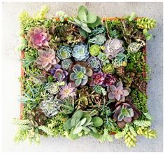 Glorious bunch of succulents! Hang it on the wall or the centerpiece on a big dining room table.