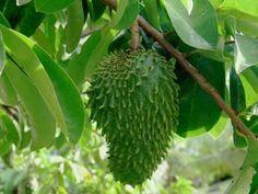 La Planta que cura el cancer - Taringa!