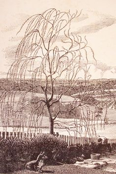 Charles Frederick Corgi in the garden, etching