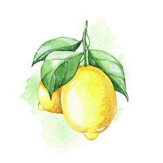 Lemon Painting, Lemon Watercolor, Watercolor Fruit, Fruit Painting, Watercolor Animals, Abstract Watercolor, Watercolor Illustration, Watercolor Flowers, Watercolor Paintings