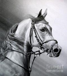 Arabian Beauty by Miro Gradinscak  Drawing, art, horse, animal,