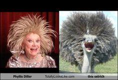 Phyllis Diller --->  Ostrich