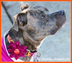 Dog Collar Fabric Flower Tutorial
