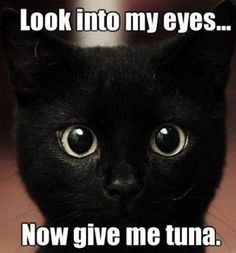 More cat stories
