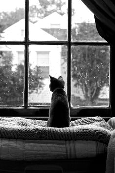 Sometimes the nicest thing you can do with your day is to watch raindrops coming down a window pane.