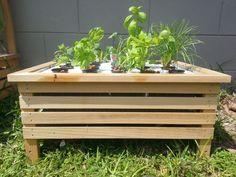 Fizzy Farm hydroponics