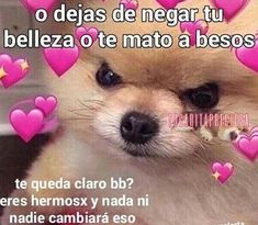 Read 🐾 veintidós from the story ♡̷̷ꦿmemes soft! Memes Lindos, Cheesy Quotes, Cute Phrases, Cute Love Memes, Dont Love Me, Wholesome Memes, Love Messages, Foto Bts, Life Motivation