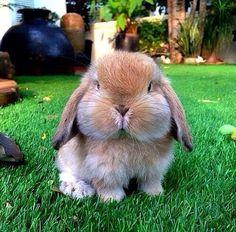 Bunny Cheeks.
