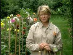 How To Urban Garden Martha Stewart demonstrates how to stake dahlias. - Martha Stewart demonstrates how to stake dahlias. Cut Flower Garden, Flower Farm, Flower Gardening, Organic Gardening, Gardening Tips, Cut Garden, Kitchen Gardening, Garden Plants, House Plants