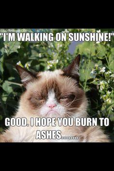I love grumpy cat !