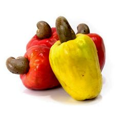 """Cashew Nut Seeds Cashew Apple (Anacardium occidentale)  3,45€  Cashew Nut Seeds Cashew Apple (Anacardium occidentale) Price for Package of 1 seeds. The fruit of the cashew tree is an accessory fruit (sometimes called a pseudocarp or false fruit). What appears to be the fruit is an oval or pear-shaped structure that develops from the pedicel and the receptacle of the cashew flower. Called the cashew apple, better known in Central America as """"marañón"""""""