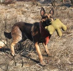 I love when Dogmeat randomly plays with a Teddy #Fallout...