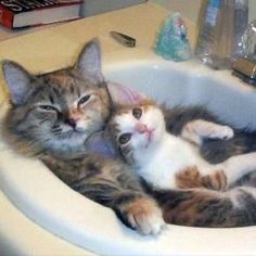 Saw this pic and it made my day just a little more awesome- hope everyone is having a wonderful Friday!!!  #tgif #catsofinstagram #eyes #instacute #kittens #lol #instamood #instagood #picoftheday #justchillin #petselfie #cutekitten #cats #friday #WEEKEND #cute #furry #fluffy #animals #cuddles #yay