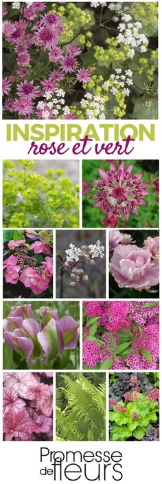 Perennial massif in pink and green – An atmosphere to discover on the site Promesse de Fleurs - Fruit Tree Garden, Garden Trees, Balcony Garden, Fruit Trees, Trees To Plant, Gardening Magazines, Gardening Tips, Pine Tree Tattoo, Colorful Trees