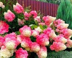 Hortensje bukietowe – przegląd nowych odmian - Allegro.pl Beautiful Birds, Gardens
