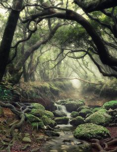~Mystical Forest ~