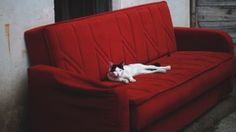Preview wallpaper cat, sofa, lies 1920x1080