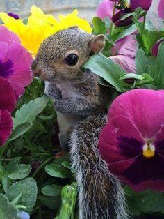 esquilo no meio das flores