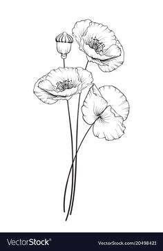 Flat Single Poppy Vector Image On in poppy flower drawing Flat single poppy vector image on Flower Line Drawings, Flower Sketches, Art Drawings, Diy Embroidery Projects, Hand Embroidery Patterns Free, Background Vintage, Background Patterns, Vintage Backgrounds, Background Clipart